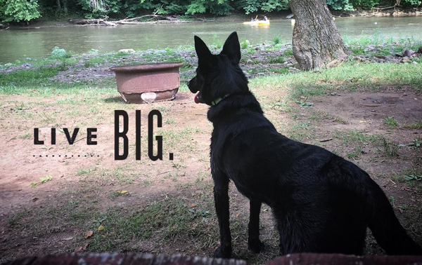 Live Big: Storm is a Purina ambassador! #StormLiveBig