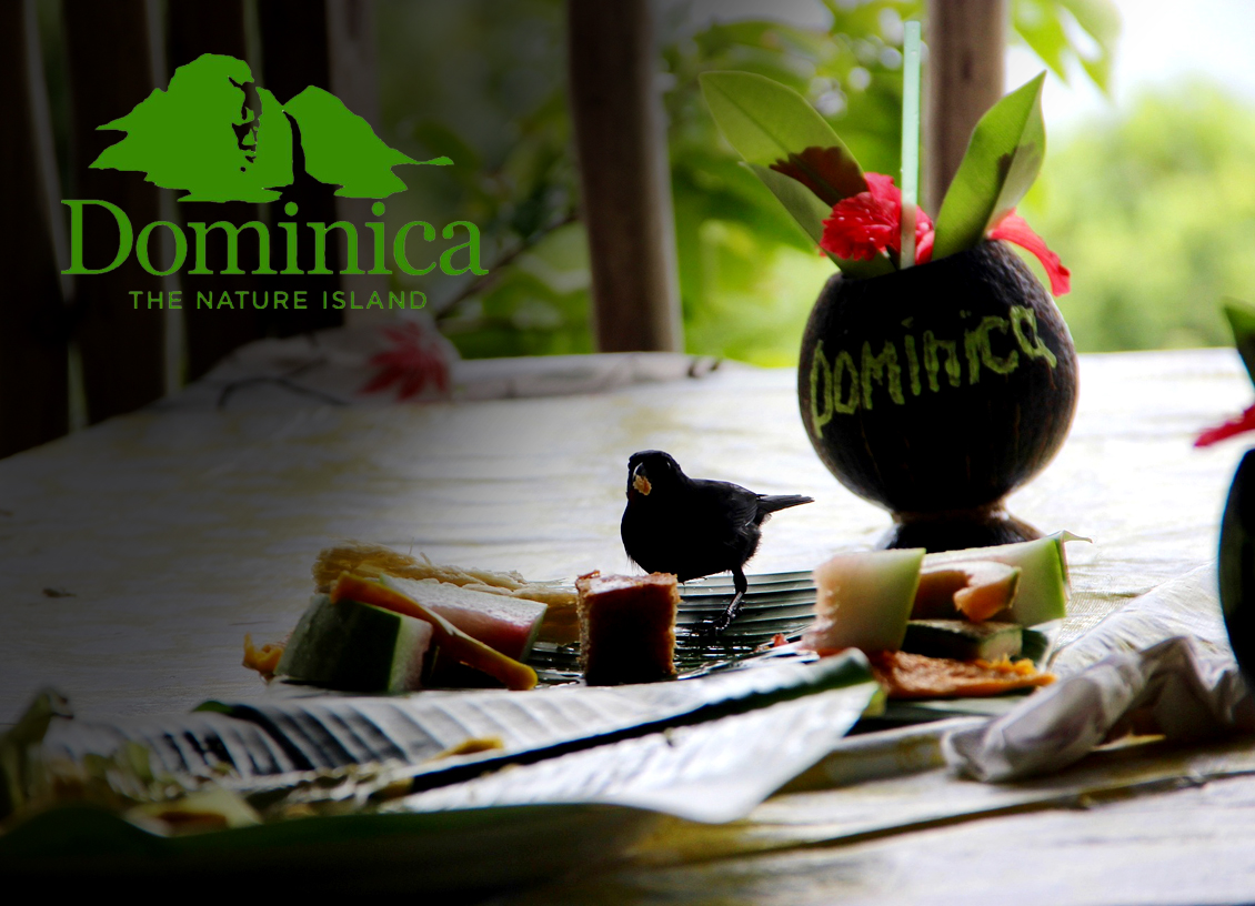 Discover Dominica Authority launches Tourism Industry Progress Website