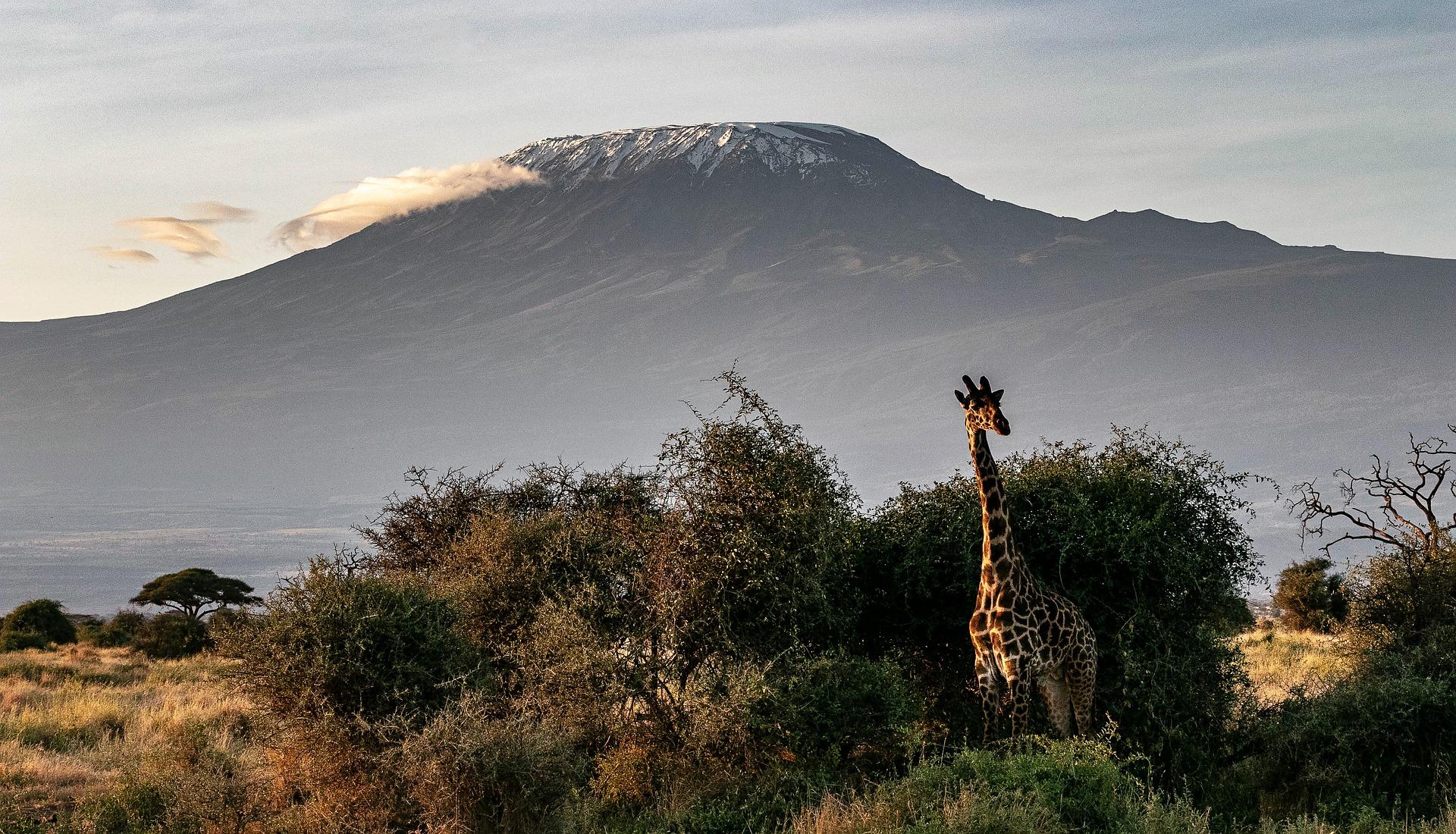 tanzania kilimanjaro africa