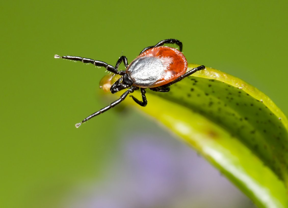 Prevent and Treat Lyme Disease Fast to Avoid Complications
